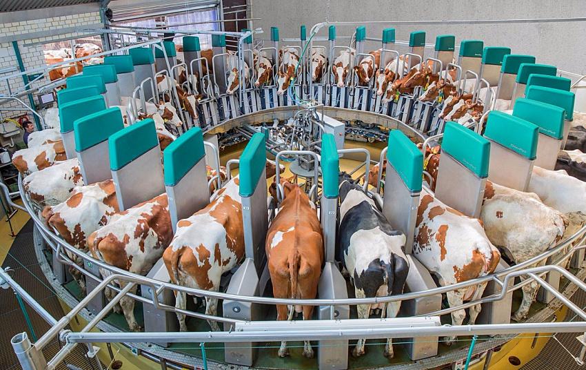 Доля Белоруссии впоставках молочной продукции вРФ достигла 86% — Россельхознадзор